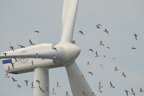 Wind-Turbines-and-Birds-Could-Mix-USA1